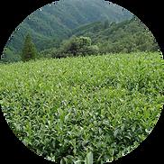 角田製茶について
