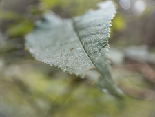 Macro Leaf No.1
