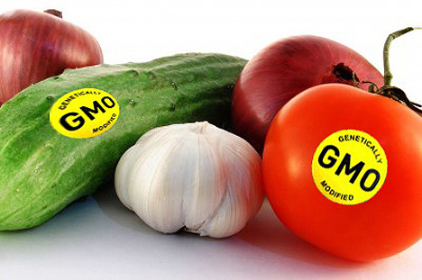 GMF (GENETICALLY MODIFIED FOODS) – MAKANAN TERUBAH SUAI GENETIK