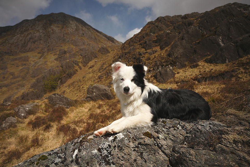 Dog-at-Glen-Nevis-Highlands-and-Islands