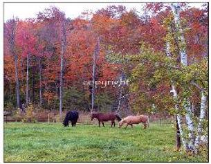 horses-251x195.jpeg
