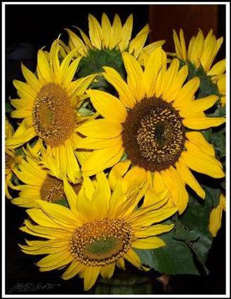 sunflowers-293x378.jpeg