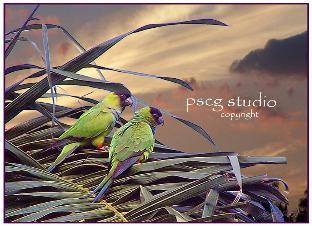 boca_birds_copy2-312x226.jpeg
