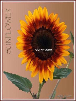 suncopy_2-289x385.jpeg