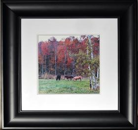 horses_framed-280x265.jpeg