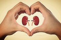 Kidney_edited_edited.jpg