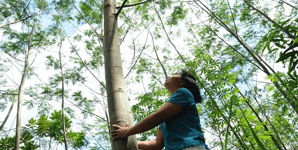 Baumpflanzprojekte kompensieren CO2. Zusammen mit zertifizierten Partnern pflanzen wir Bäume fürs Klima.