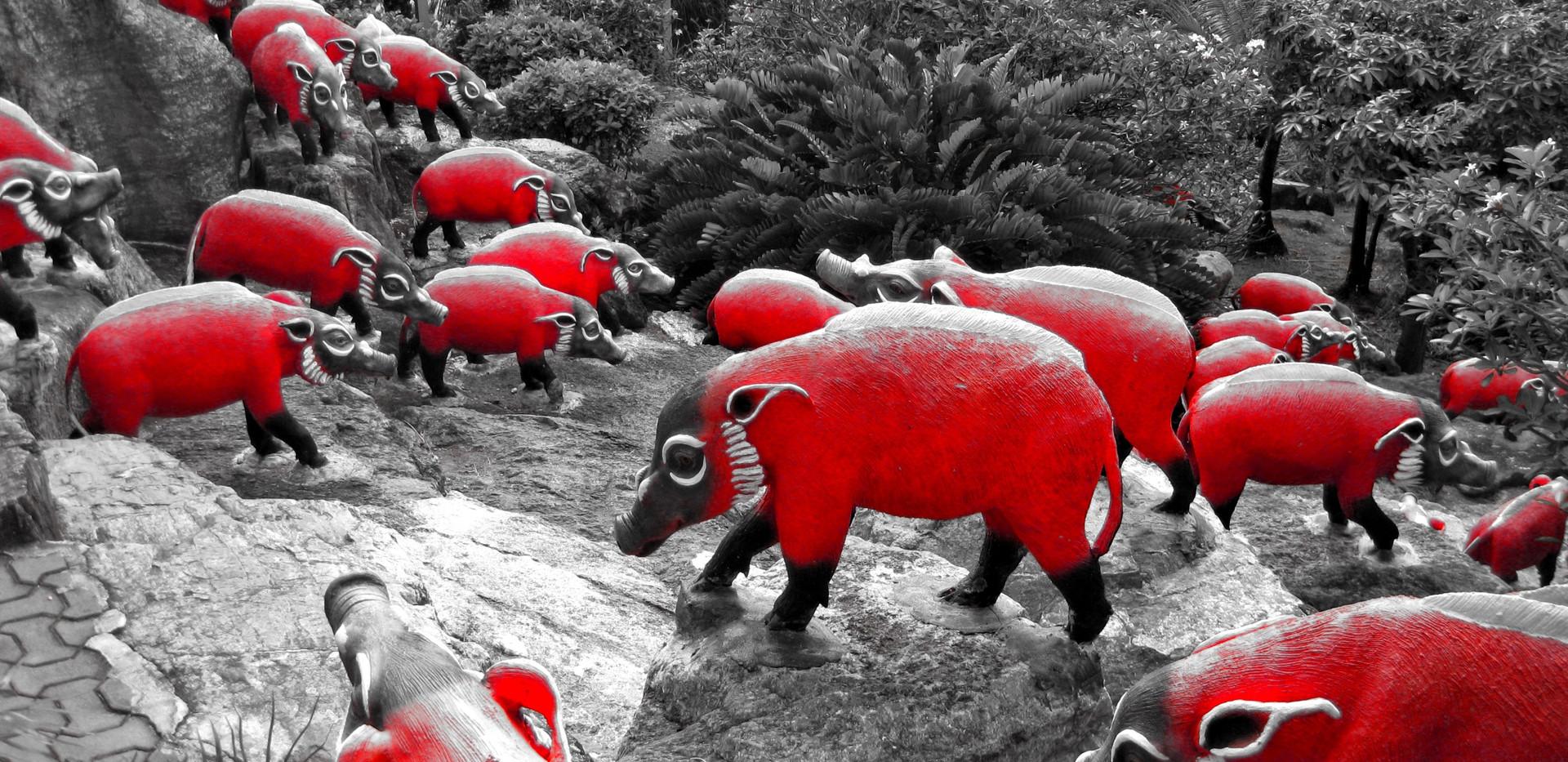 Herde in Rot
