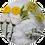 Thumbnail: Conjunto de arreglos en tarro