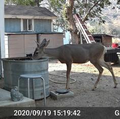 Juniper Hills, CA