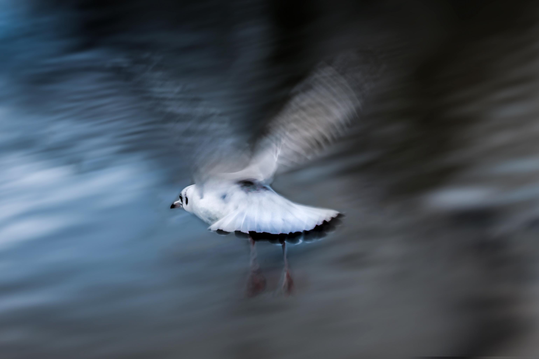 Seagull blurred