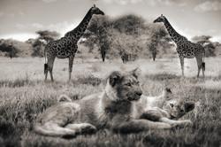 Afrikanische Szene