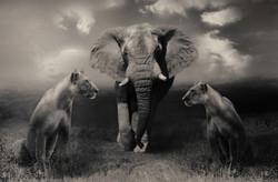 Elefant und Löwen