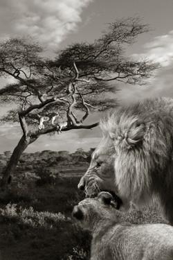 Afrikansiche Szene