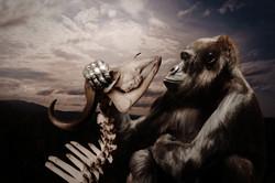 gorilla und skelett