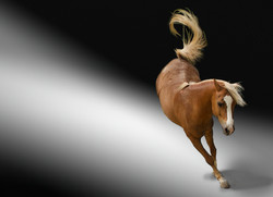 Pferdeschau