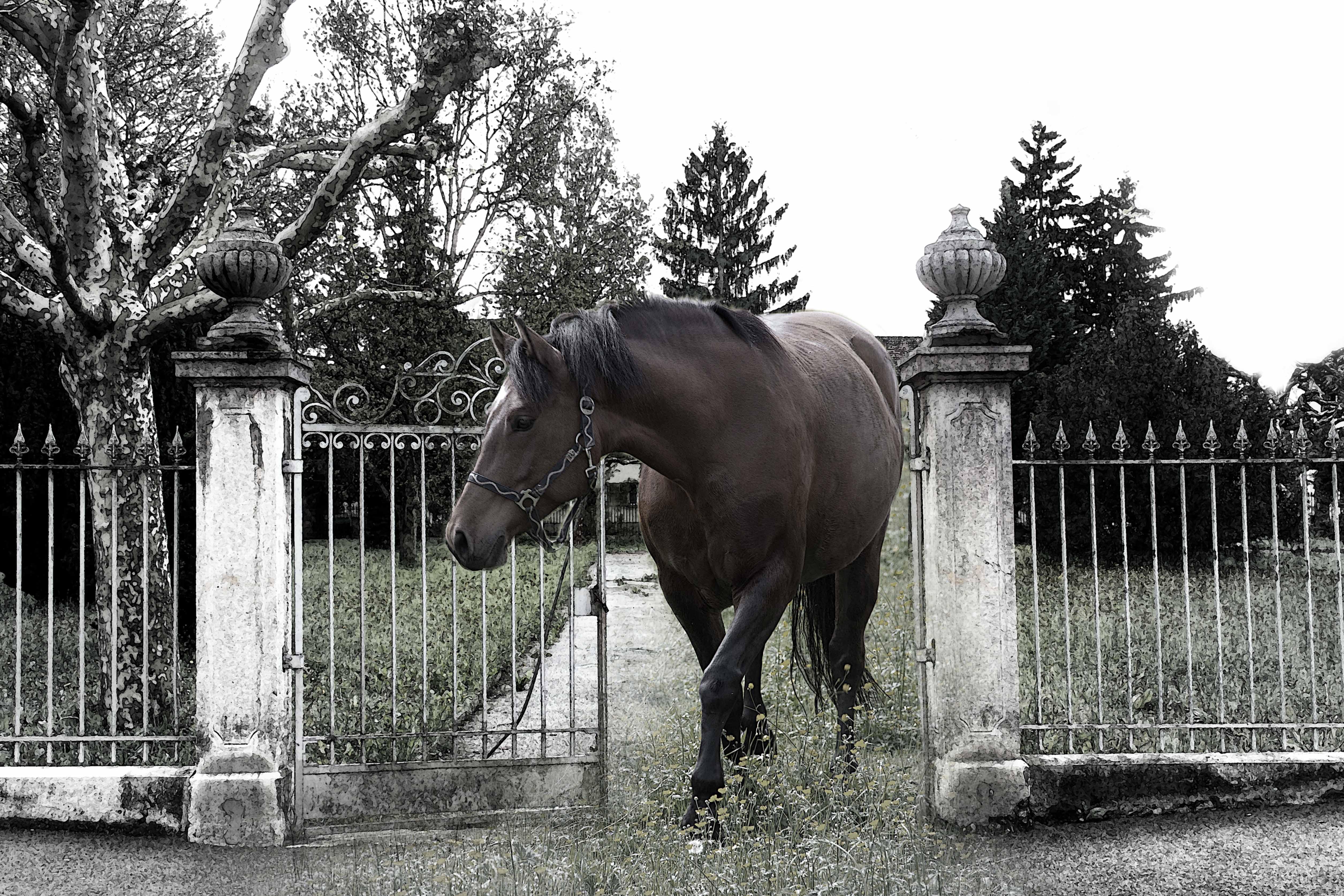 Pferd in Pratteln