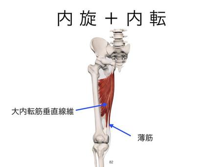 IMAC下肢筋テスト編