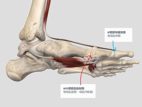 下肢へのアプローチ