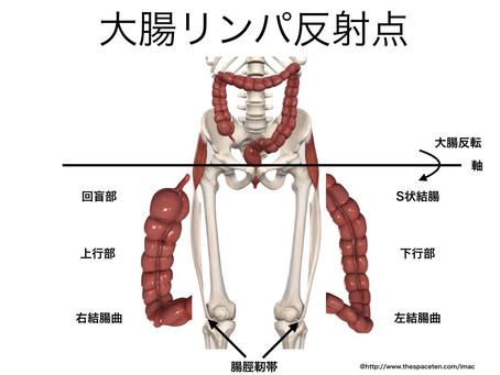 呼吸と内臓