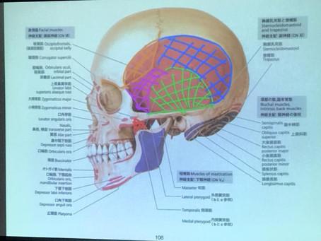 IMAC頭頸部
