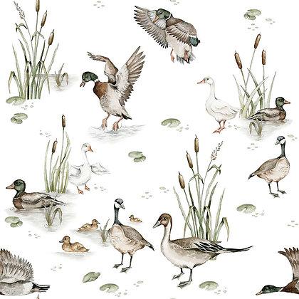 Ducks Lake Wallpaper / Return to Innocence
