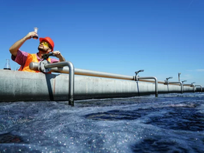 What Processes Occur in Biological Nutrient Removal Wastewater Treatment Plants?