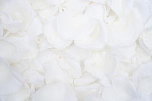 White-flower-petals-1-1024x683.jpg