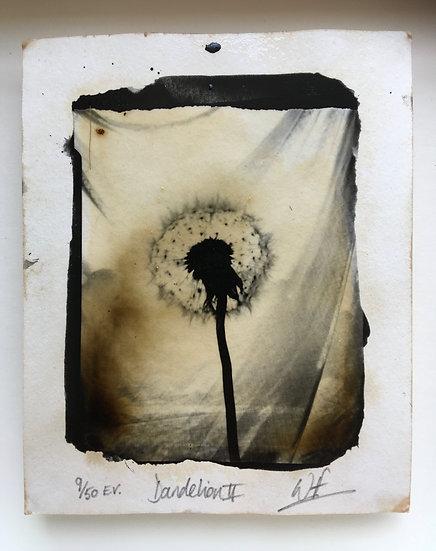 Wayne Foskett Dandelion Print