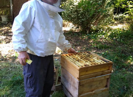 Making honey - a mindful matter