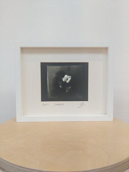 Snowberries  Framed with glass - Wayne Foskett