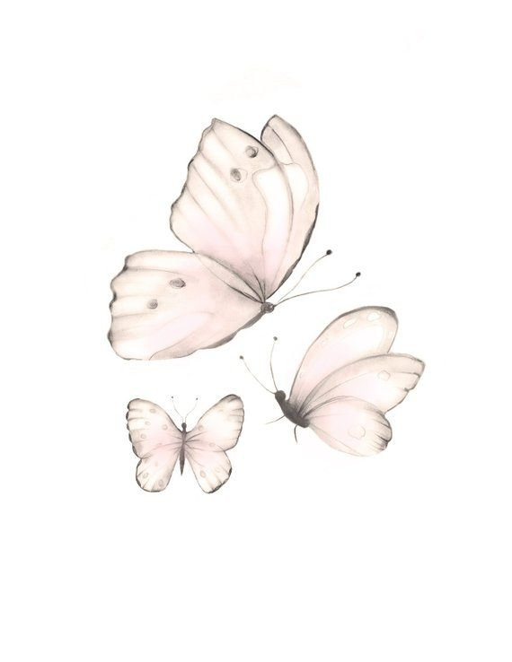 Pink Butterfly Pint Sweet Blush Butterfl