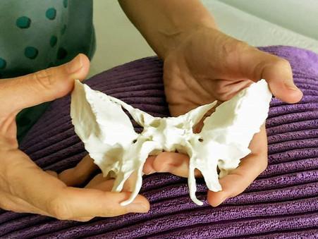 Bone by Bone - Sphenoid
