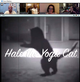 halo-yoga-cat.jpg