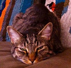jesse-cat.jpg