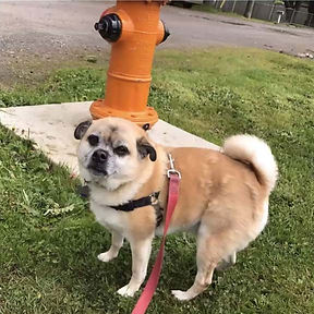 more-and-fire-hydrant.jpg