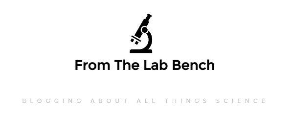 lab bench.jpg