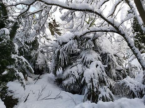 Palmiers sous la neige