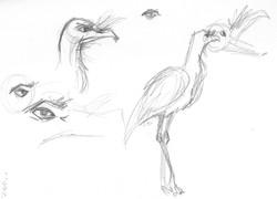 zoo6_7 crane.jpg