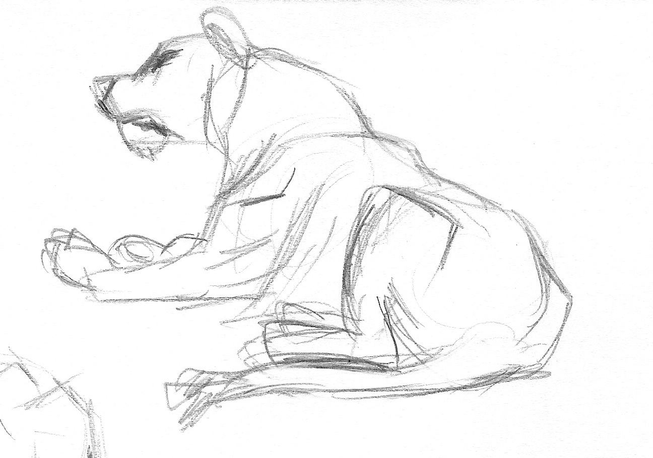 zoo6_7 Lioness.jpg