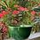 Thumbnail: Pottery Bowl M verde