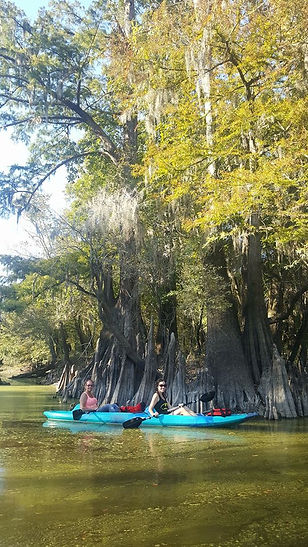 Honey Island Kayak Tours. Cypress Trees. Swamp Tour.
