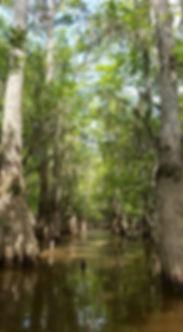 New Orleans kayak swamp tours.