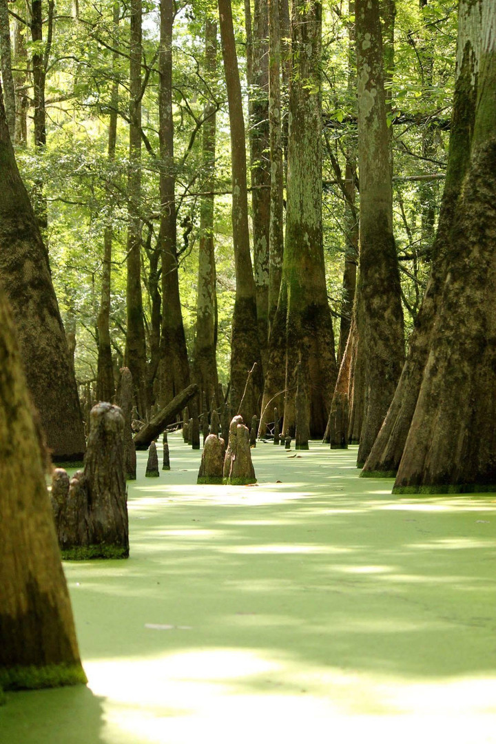 Swamp Magic!