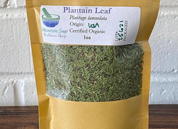 Certified Organic Plantain Leaf ∣ Mountain Sage Wellness Shop