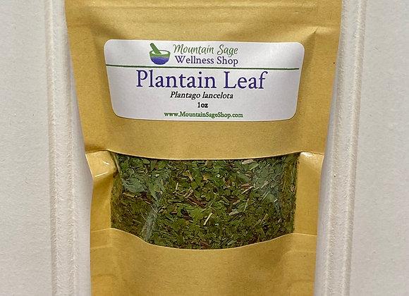 Organic Plantain Leaf ∣ Herb Shop ∣ Bulk Herbs ∣ Organic Herbs ∣ Mountain Sage Wellness Shop