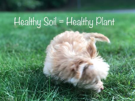 Healthy Soil = Healthy Soil