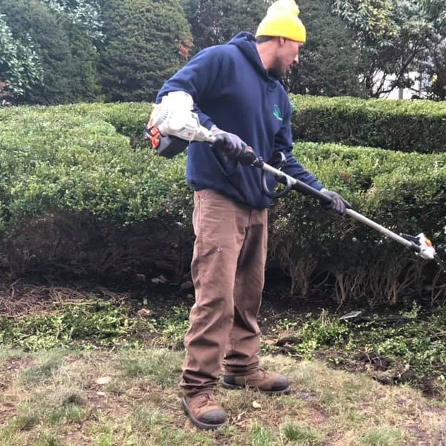 Shrub Triming