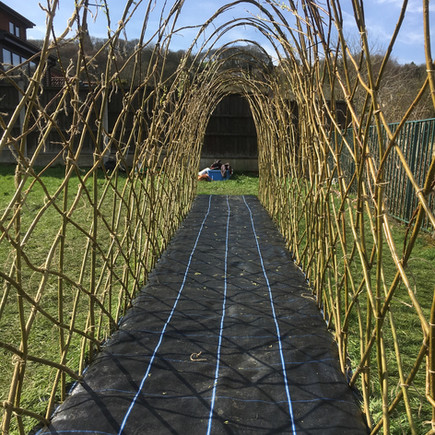 Living Willow Tunnel Project at St Joseph's RCP Primary School.