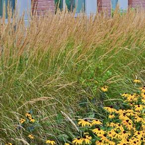 Ornamental Grass Pruning Times